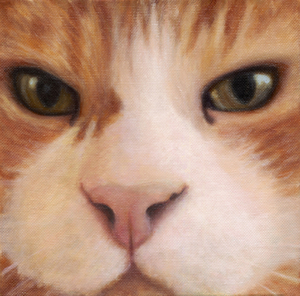 """You Looking at Me?"", 8 x 8 oil by Dana Feagin, Sold"